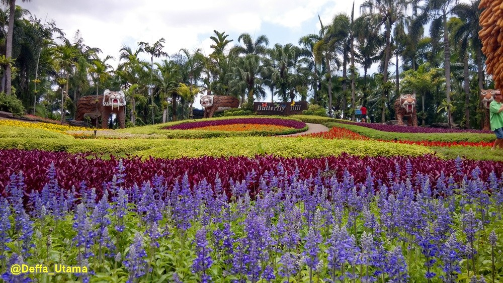 How to Explore Pattaya in 1 Day - Butterfly Hill