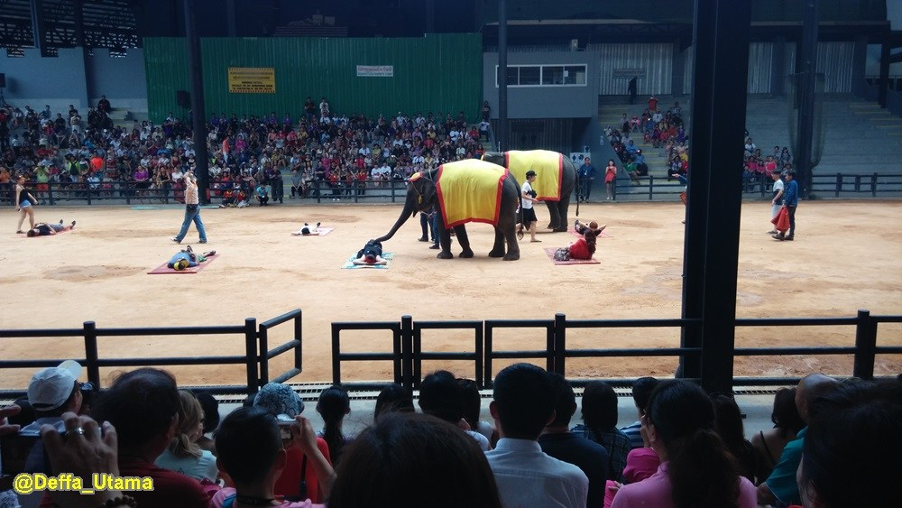 How to Explore Pattaya in 1 Day - Elephant Circus
