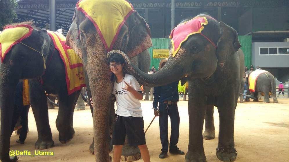 How to Explore Pattaya in 1 Day - Elephant Show